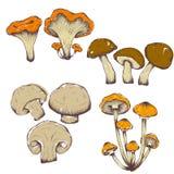 Illustrazioni disegnate a mano di vettore dell'insieme dei funghi Fotografia Stock Libera da Diritti