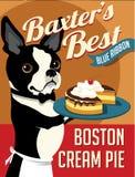 Illustrerad affisch av en Boston Terrier hund Fotografering för Bildbyråer