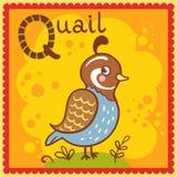 Illustrerad alfabetbokstav Q och vaktel. Royaltyfria Bilder