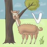 Illustrerad alfabetbokstav V och vikunjaull Tecknad film för vektor för abcbokbild Roliga vikunjaullställningar nära trädet i zoo stock illustrationer