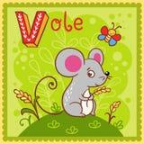 Illustrerad alfabetbokstav V och vole. Arkivfoto