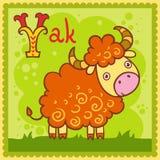 Illustrerad alfabetbokstav Y och yak. Arkivfoton