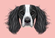 Illustrerad stående av hunden för spaniel för engelsk Springer stock illustrationer