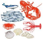 Illustrerad uppsättning av skaldjur Royaltyfri Bild