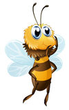 A bee Stock Image