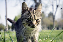 İlness Cat. In the Nature Royalty Free Stock Photo