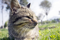 İlness Cat. In the Nature Royalty Free Stock Image