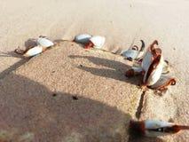 Ils apportent sur les fruits de mer à la maison de sable photo stock