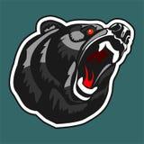 ilsken björn Arkivbilder
