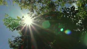Ilsken blick av solen till och med filialerna av ett träd lager videofilmer