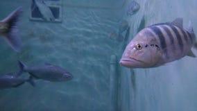 Ilsken fisk royaltyfria foton