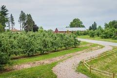 Ilsken fruktträdgård för fruktträdgårdApple träd royaltyfri bild