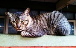 Ilsken katt Royaltyfri Fotografi