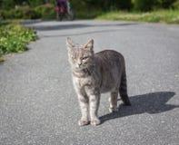 Ilsken katt i parkera på ett spår Fotografering för Bildbyråer