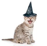 Ilsken katt med hatten för halloween På vitbakgrund Arkivbild