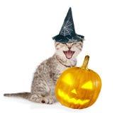 Ilsken katt med pumpa och hatten för halloween På white Royaltyfri Bild