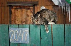Ilsken katt på staketet Arkivfoto