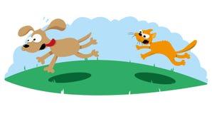 Ilsken katt som jagar en hund Arkivfoto