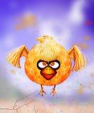 Ilsken seende orange fågel Arkivfoto