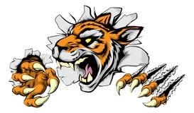 Ilsken tigersportmaskot Fotografering för Bildbyråer