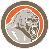Ilskna Gorilla Head Circle Retro Royaltyfria Bilder