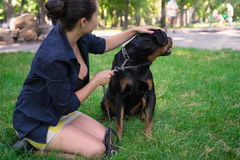 Ilskna Rottweiler på en koppel Arkivfoton