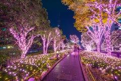 Iluminação do inverno no Tóquio, Japão foto de stock
