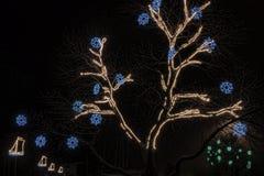 Iluminação do Natal em árvores fotografia de stock royalty free