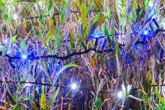 Iluminação e arbustos com lâmpadas do Natal Imagens de Stock Royalty Free