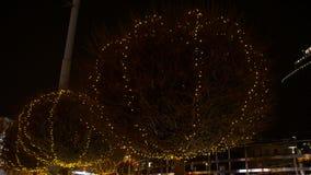 Iluminação em árvores video estoque