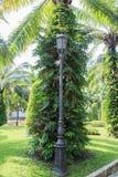 Iluminação no jardim Fotografia de Stock