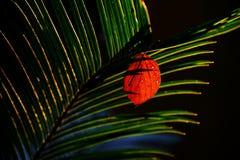 Iluminação traseira das folhas na vida ainda Fotografia de Stock Royalty Free