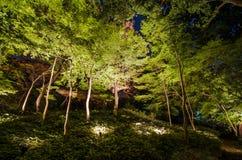 Iluminações sazonais no jardim de Rikugien foto de stock