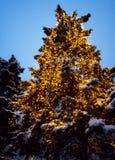 Iluminación celebradora de la noche del invierno Fotografía de archivo libre de regalías