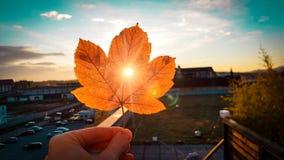 Iluminación de la luz de la puesta del sol y agujero del pensamiento penetrante pequeño en rojo del otoño y hoja coloreada ama imagen de archivo