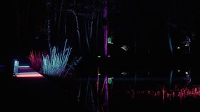 Iluminación del bosque en el mún lippspringe del parque almacen de video
