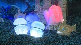 Iluminación en acuario metrajes