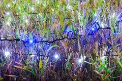 Iluminación y arbustos con las lámparas de la Navidad Foto de archivo libre de regalías