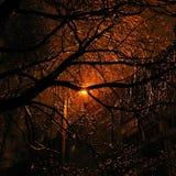 Iluminaciones de la Navidad de la naturaleza - cordón de oro Fotos de archivo