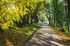 Iluminado por el callejón del otoño de la luz del sol Imagen de archivo