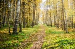 Iluminado por el callejón del otoño de la luz del sol Imagen de archivo libre de regalías
