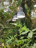 Iluminando plantas tropicais na estufa imagens de stock royalty free