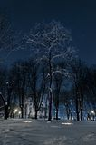 Iluminated tree under vinter i den Belgrade bluen Arkivfoto