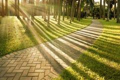 Ilumine o por do sol das árvores foto de stock royalty free