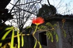 2 iluminou a flor na frente de algumas ruínas com árvores em contraste com um por do sol imagens de stock