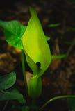 Iluminująca roślina Obrazy Stock