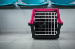 Iluminująca skrzynka z czarnym i ciemnym czarnym kotem na wśrodku podłogi w poczekalni w Weterynaryjnej karetce Owłosiony tomcat  obrazy stock