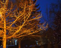 Iluminujący Bezlistny drzewo W zimie zdjęcia stock