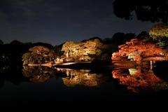 Iluminujący jesień ogród Zdjęcie Stock