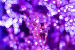 Iluminujący purpura kwiatów zamazany tło Obrazy Stock